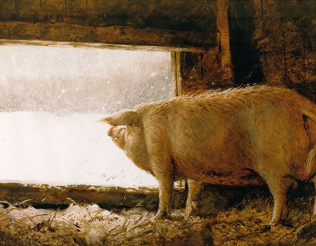 Wyeth_Pig Looking